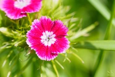 A bright flower. Olympus Pen-F w. 60 mm macro lens
