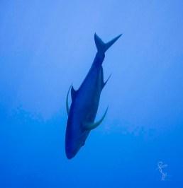 glebflosssen fish-3018