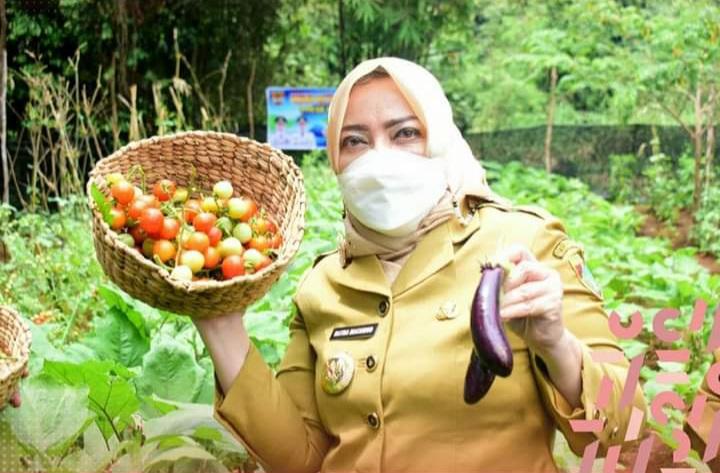 Bupati Panen Perdana Sayuran Pekarangan Toga PKK Musi Rawas