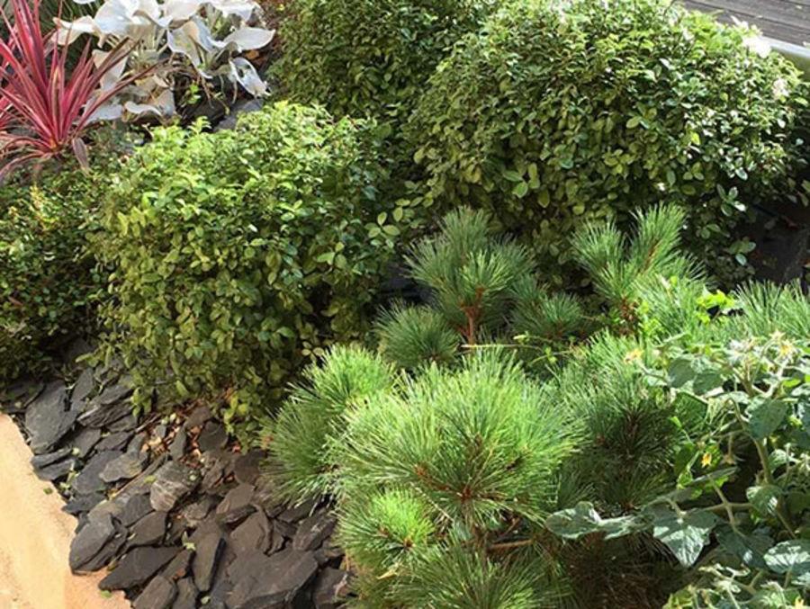 Quels Arbustes Pour Vegetaliser Un Talus Silence Ca Pousse