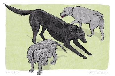 Splitting behaviour in dog communication