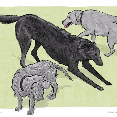Splitting behaviour in dog communication