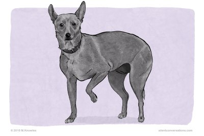 Paw Lift – Dog Body Language