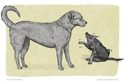 Freezing or Stillness – Dog Body Language