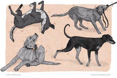 Displacement behaviour in dogs