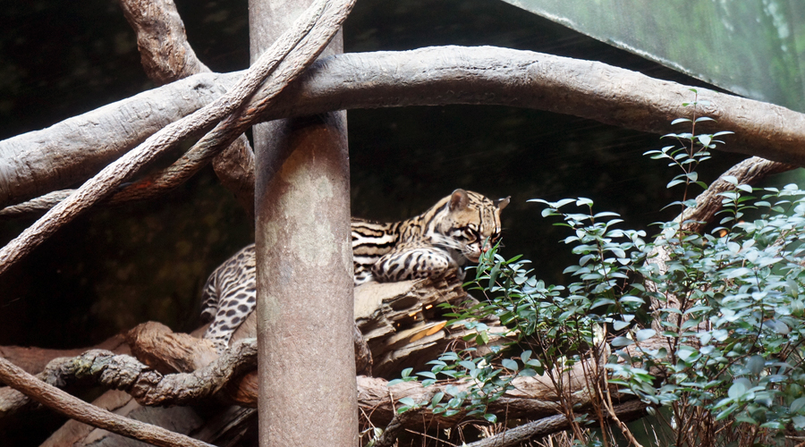 woodland_park_zoo_22