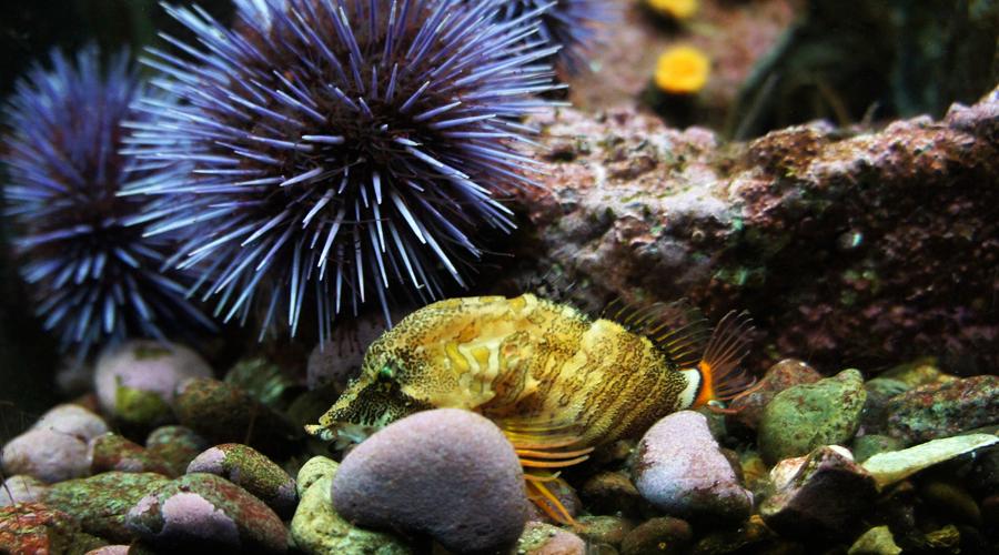 02-seattle-aquarium-yellow-fish