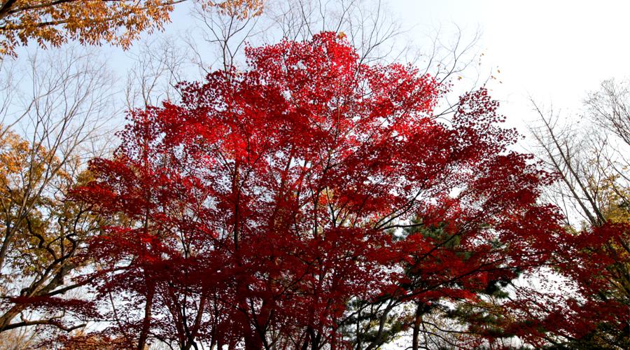 2015-jong-myo-shrine-seoul-korea-11