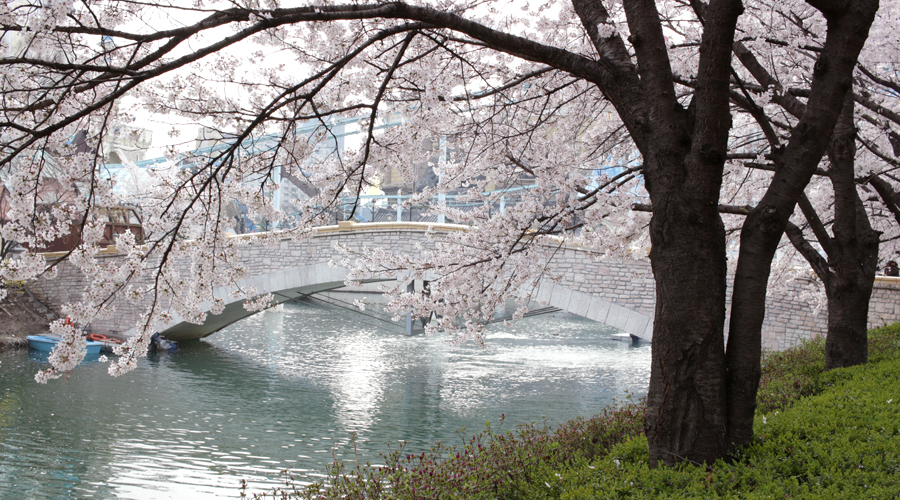 2015-04-09-korea-seoul-jamshil-seokchon-lake-cherry-blossoms-02