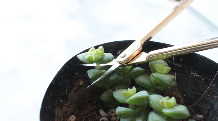 silentlyfree-succulents-how-to-grow-11