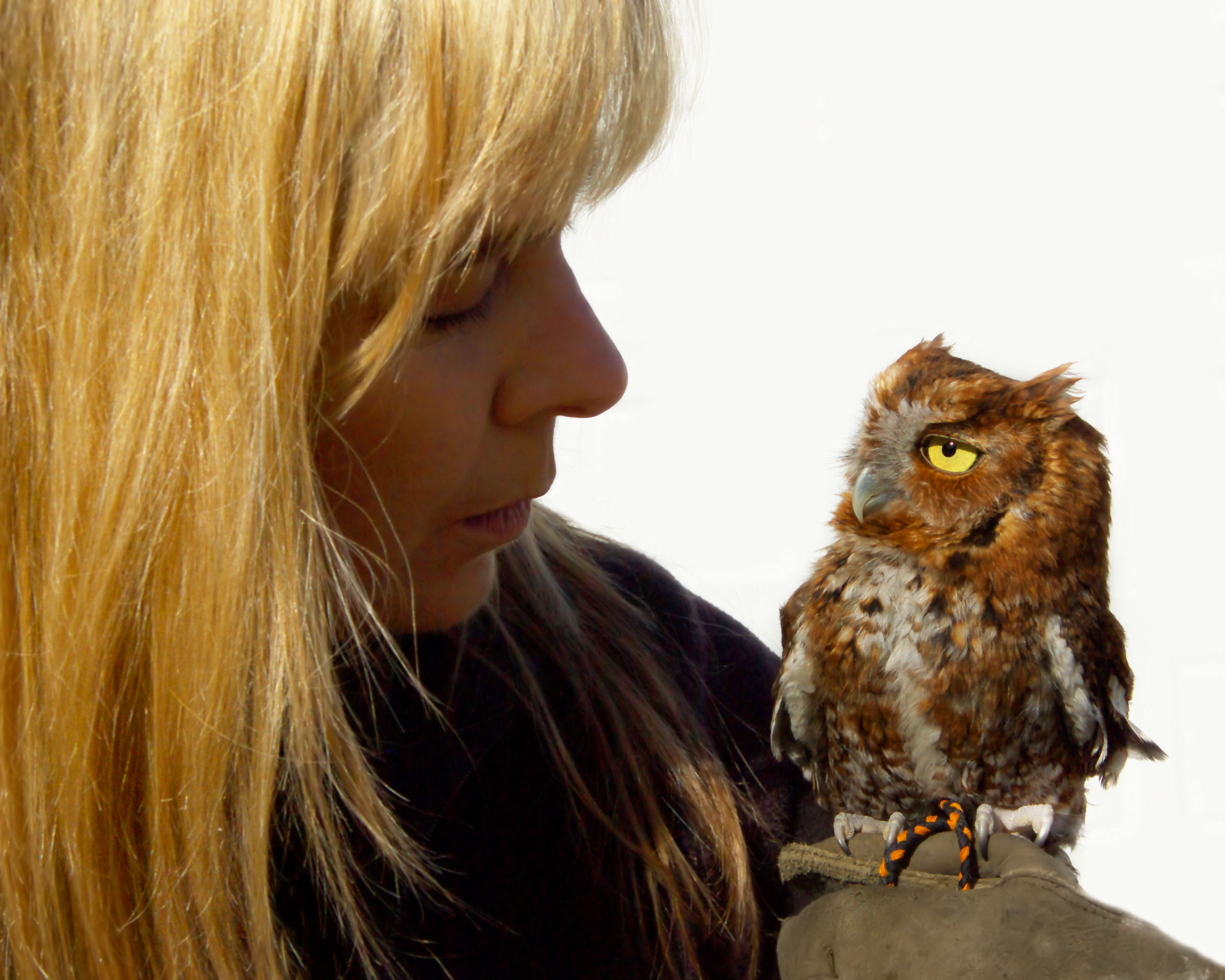 "Red-phase Eastern screech owl, ""Hootie"", and handler, Trish."