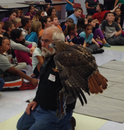 Red-tailed hawk with handler, David Larrow