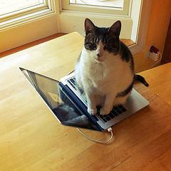 IT Support Cat
