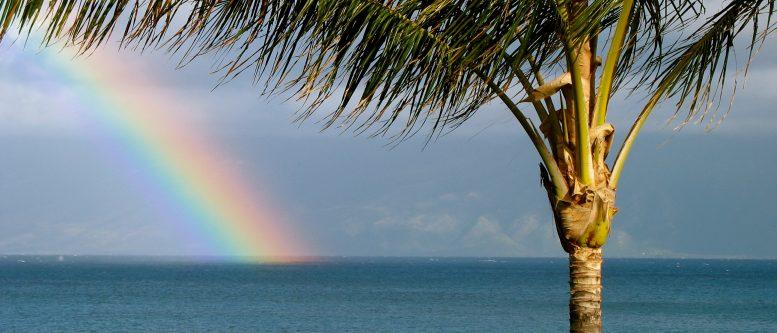 Maui rainbow with Palm Tree