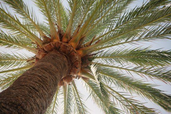 Palm Tree Stream of Consciousness