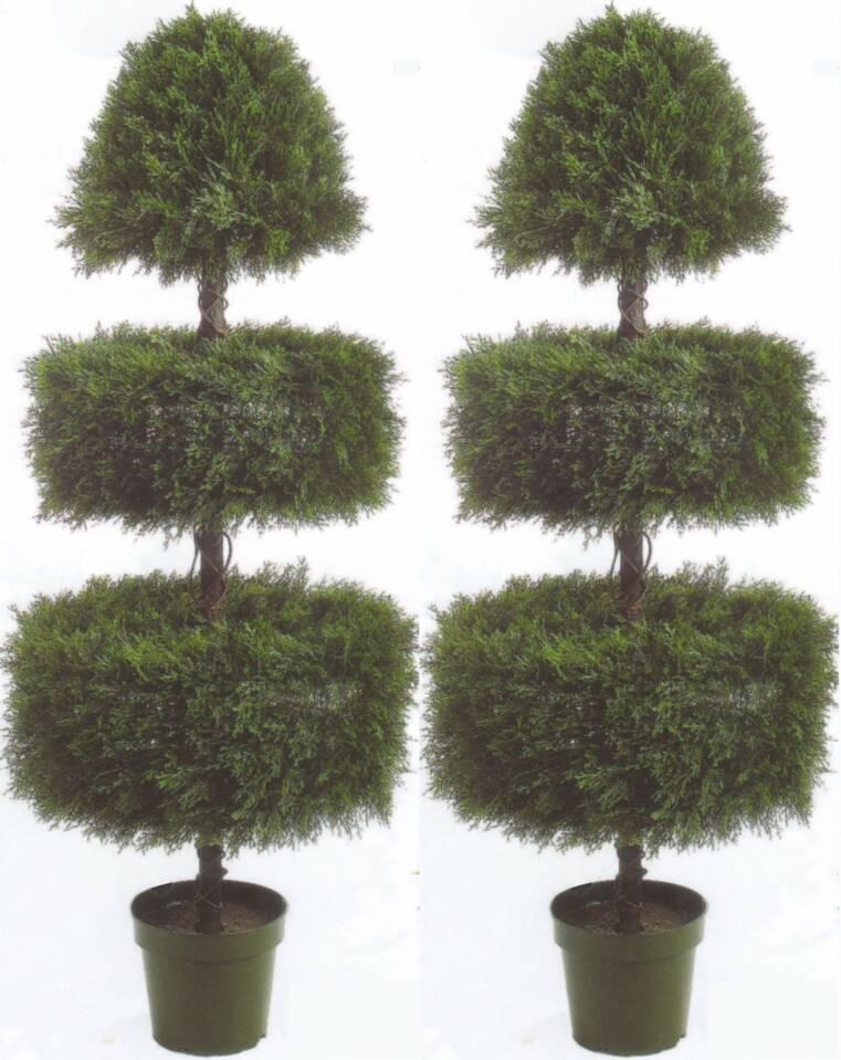 Outdoor Ficus Tree Wwwimgkidcom The Image Kid Has It