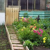 allotment with colourful flowers