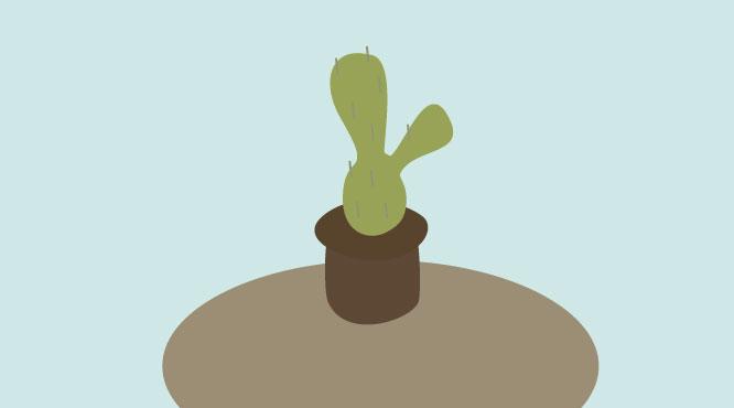 tienda-online-cactus