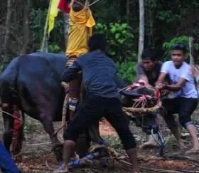 Uraian tentang Upacara Adat Ngugu Tahun Kalimantan Timur dan Penjelasannya yang lengkap