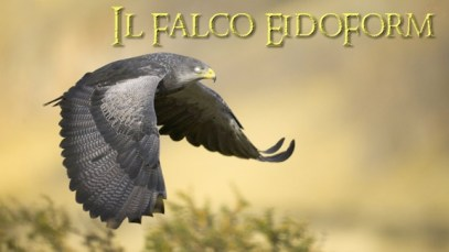 beautiful-falcon-flying-wallpaper-1502