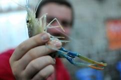 03-prawn-fishing