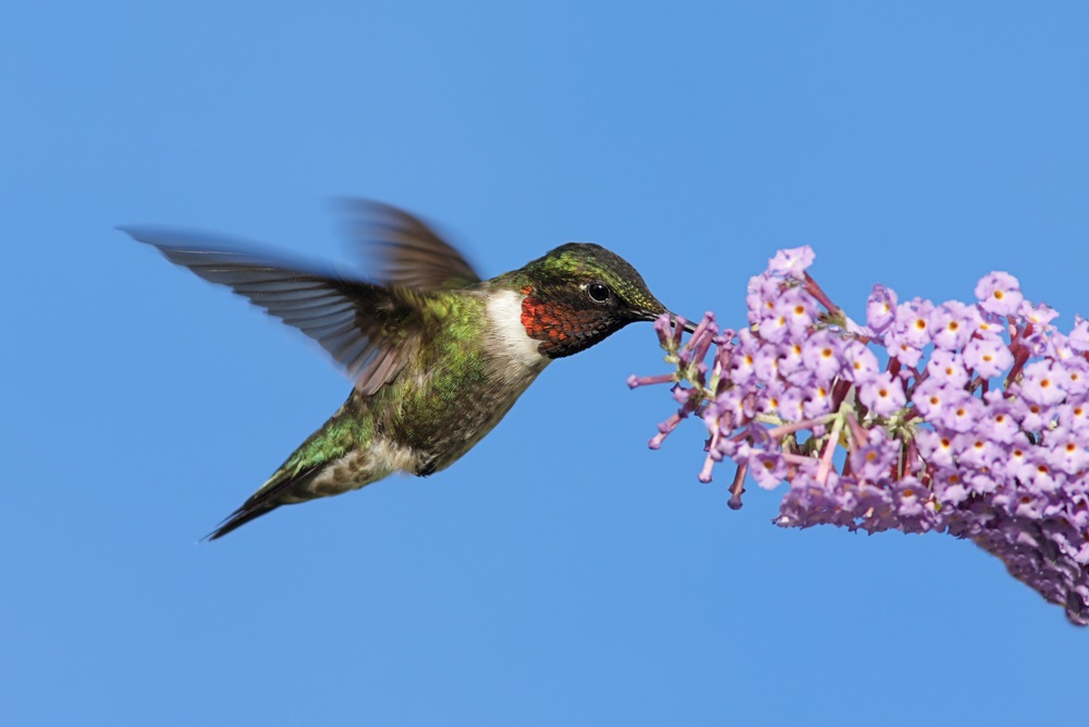 Attracting Butterflies and Hummingbirds