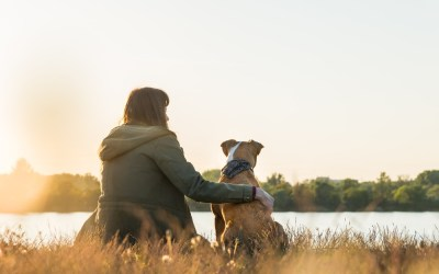 How Dogs Enhance Mental Health