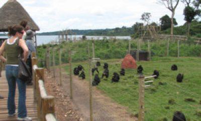 attractions in Entebbe