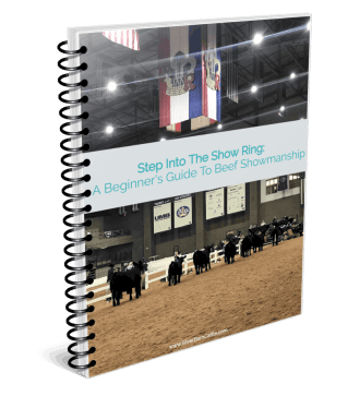 A Beginner's Guide to Beef Showmanship