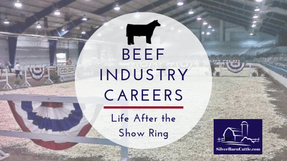 Beef Industry Careers: Life After the Show Ring