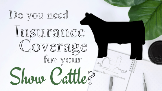 Cattle Insurance | Silver Barn Cattle