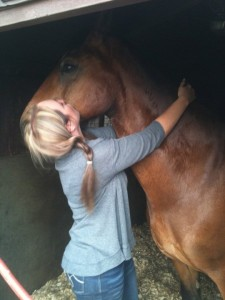 Horse Reiki in St Helens