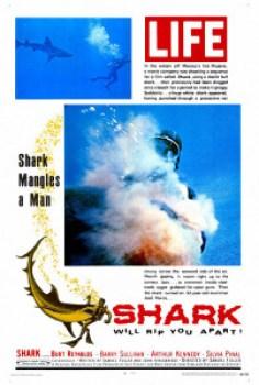 shark_1