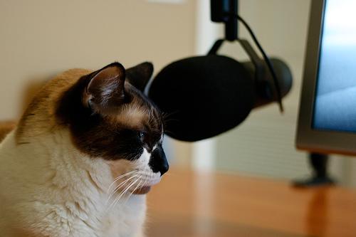 podcast_cat