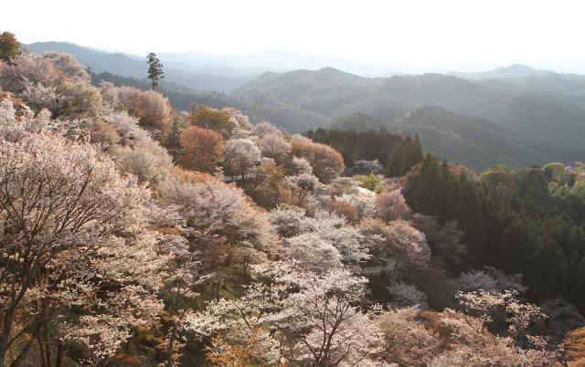 yoshino mountain nara By Akarawut Luprasongk