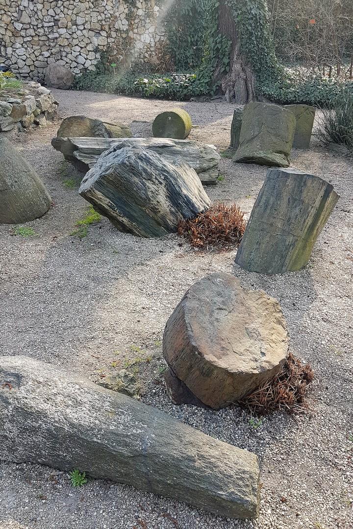 skamieniałe pnie drzew Wrocław