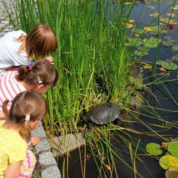 Wrocław z dziećmi: ogród botaniczny
