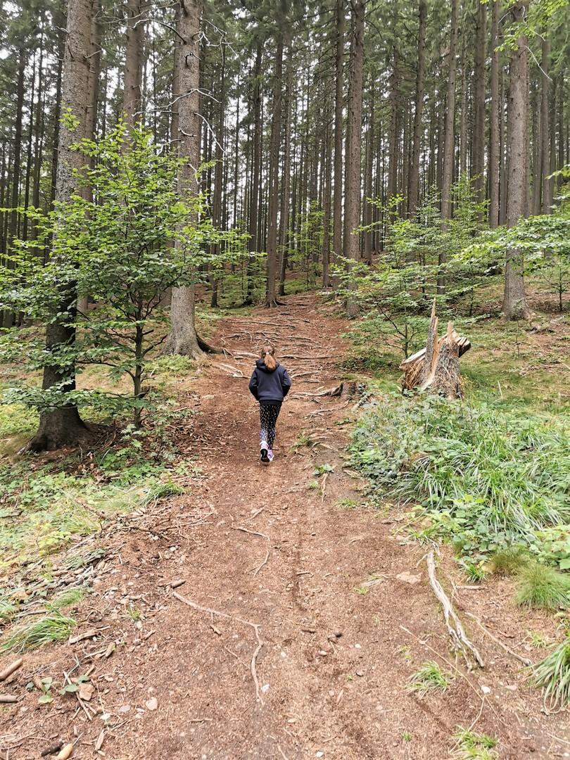Szlak zielony na Trójgarb, Góry Wałbrzyskie