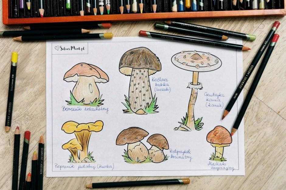 Kolorowanka grzyby jadalne