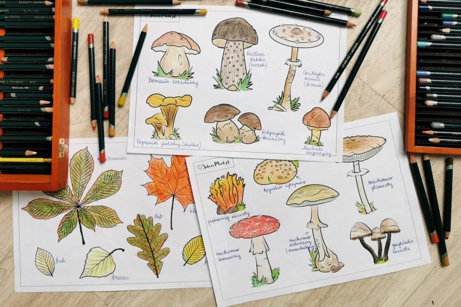 SilverMint kolorowanki grzyby jadalne, trujące, liście