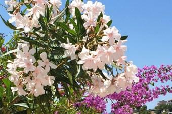 Co to za rośliny? 10 śródziemnomorskich okazów, które trzeba znać