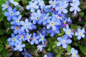 Co kwitnie wiosną w lesie?