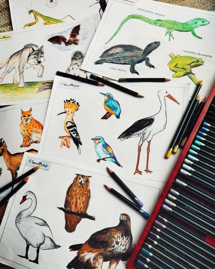 SilverMint blog kolorowanki zwierzęta chronione w Polsce