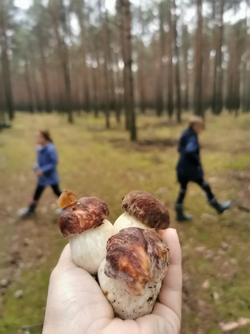 SilverMint blog gdzie na grzyby z dziećmi Dolny Sląsk