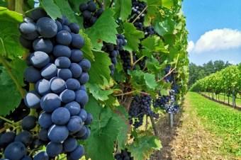 Na Dolnośląskim Szlaku Piwa i Wina – Dolina Baryczy