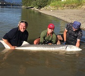 fishing bc, sturgeon fishing, guided fishing bc, river fishing bc, fraser river sturgeon fishing