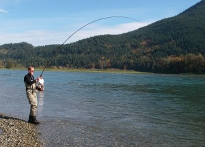 chum salmon fishing, harrison river, salmon fishing, chum salmon fishing bc, chum salmon fishing canada, chum salmon fishing fraser river valley, chum salmon fishing harrison river, chum salmon fishing guides, chum salmon guides