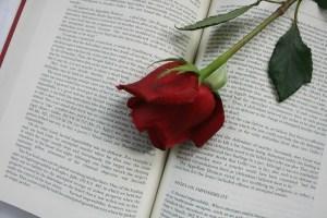 festa della donna libro