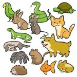 [Infografía] Cómo elegir mascota