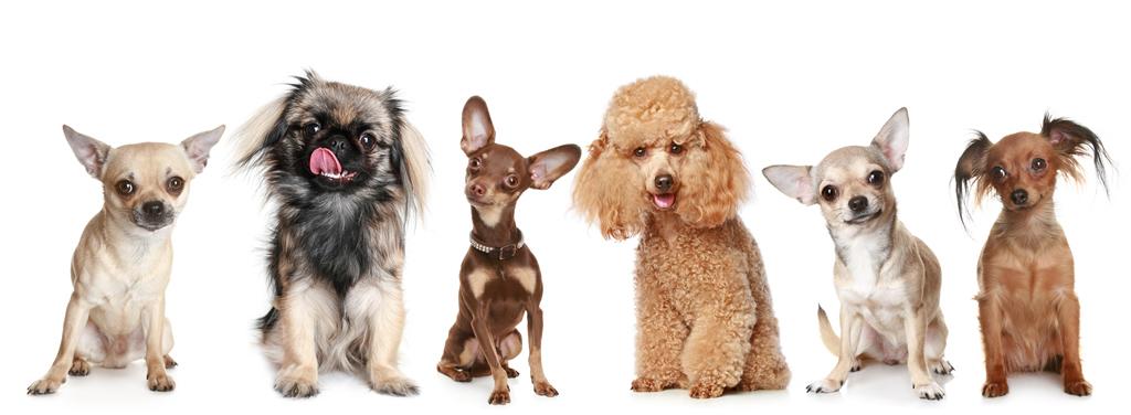 Top perros inteligentes